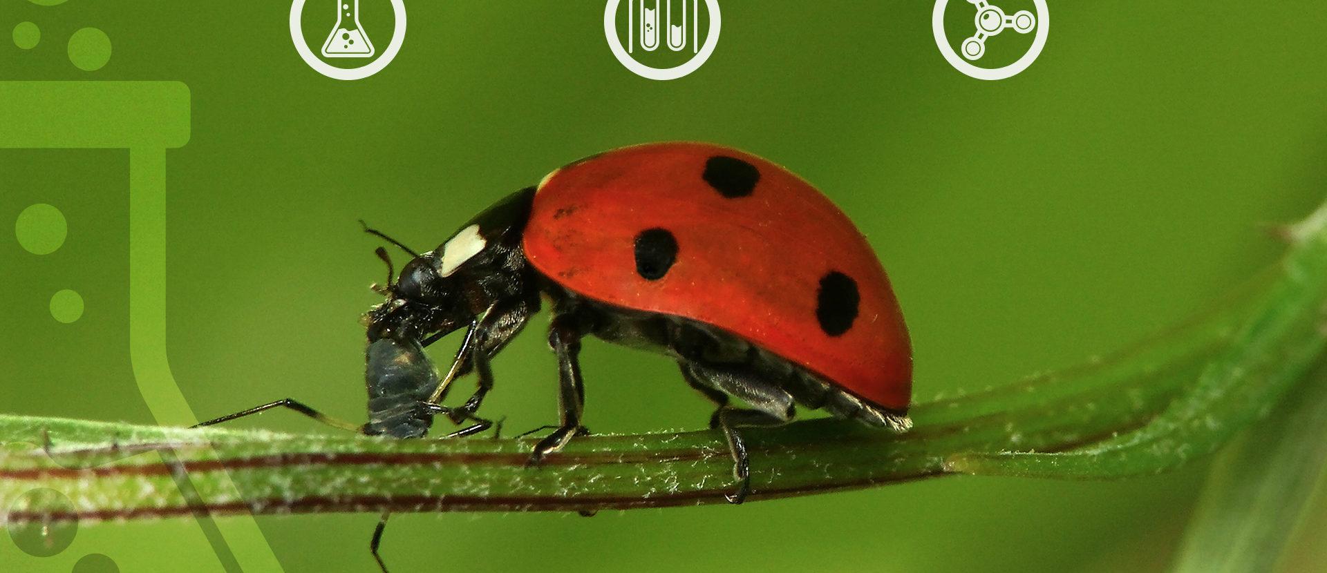 Empresa se especializa na produção de insetos  utilizados para pesquisa de biotecnologia