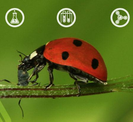 Empresa se especializa na produção de insetos para o controle biológico no campo e lavoura