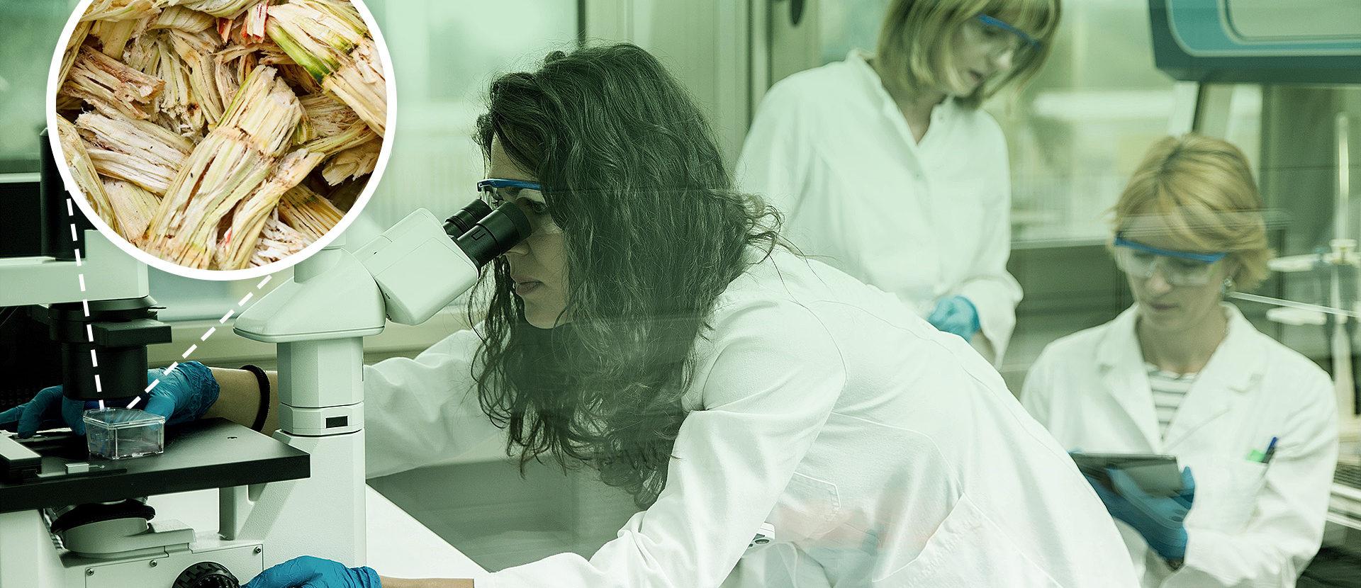 Supercola é desenvolvida por pesquisadoras brasileiras