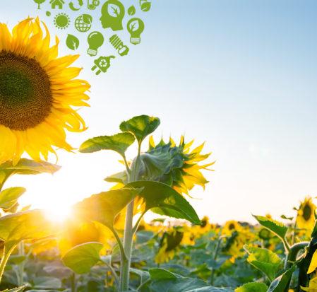 energia solar e girassol